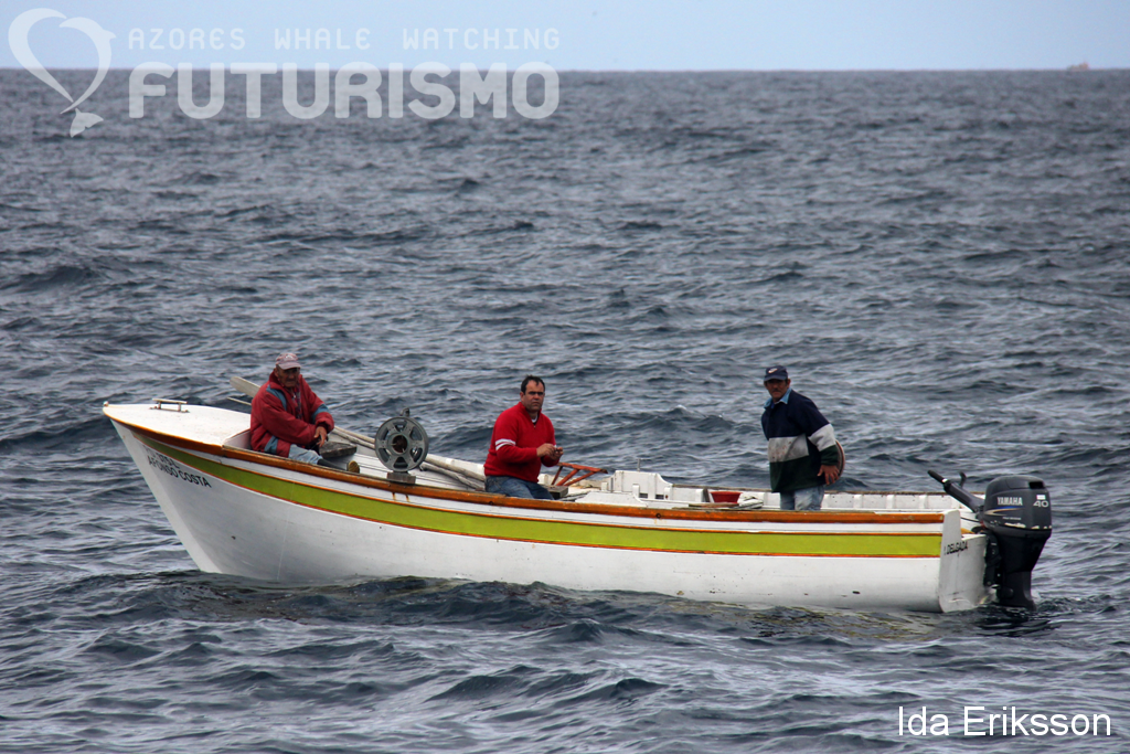 Azores whale watching futurismo bluefin tuna dolphins for Tuna fishing boat