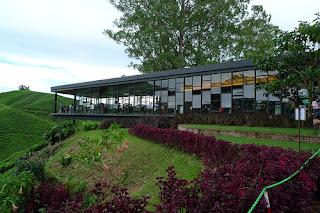 boh+tea+farm.jpg