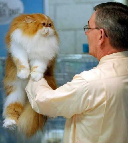 Imágenes de gatos peludos