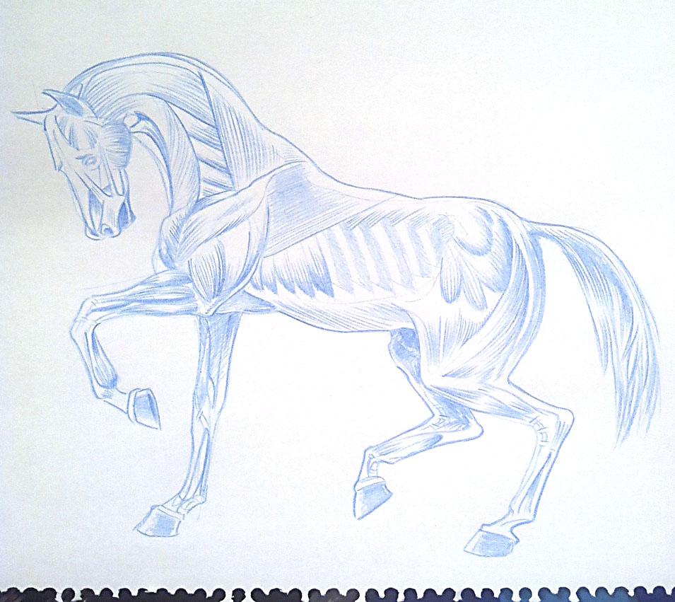 Anatomía anatotuya ... - La papelera sin fondo