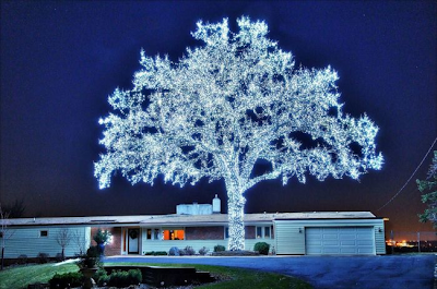 Un árbol decorado con 40.000 luces LED