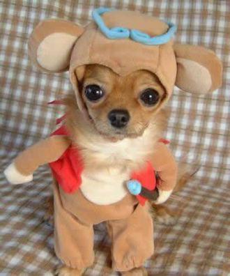 funny+dog+cute