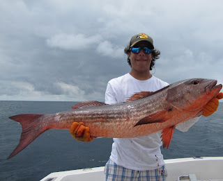 Big fishes of the world snapper mullet lutjanus aratus for Largest saltwater fish