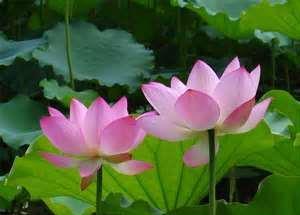 蓮花出淤泥而不染,因為有淤泥來供養蓮花,蓮花才會開出非常聖潔、艷麗、芬芳的花朵。如果淤泥是娑婆世界,修行人在日常生活工作中,能不被外在人事物環境變化所影響,保持原有清淨佛性,才能成就。一個人在忙碌當中,如果每天能撥出半小時到一小時來禪坐,就可以體會到坐禪後那股安詳的寧靜,是珍貴無價的。像現在有很多人精神不能集中,生活非常散漫,工作效率不佳。如果能來坐禪,就可以練習讓自己精神集中,而且可以改變體質,甚至可以改變氣質。   本文摘自「禪的智慧力」一書