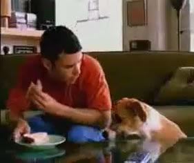 Vídeo - Cuidado com o cão