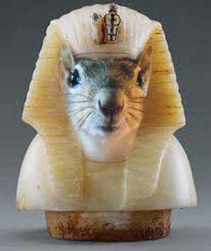 Image result for egyptian squirrel