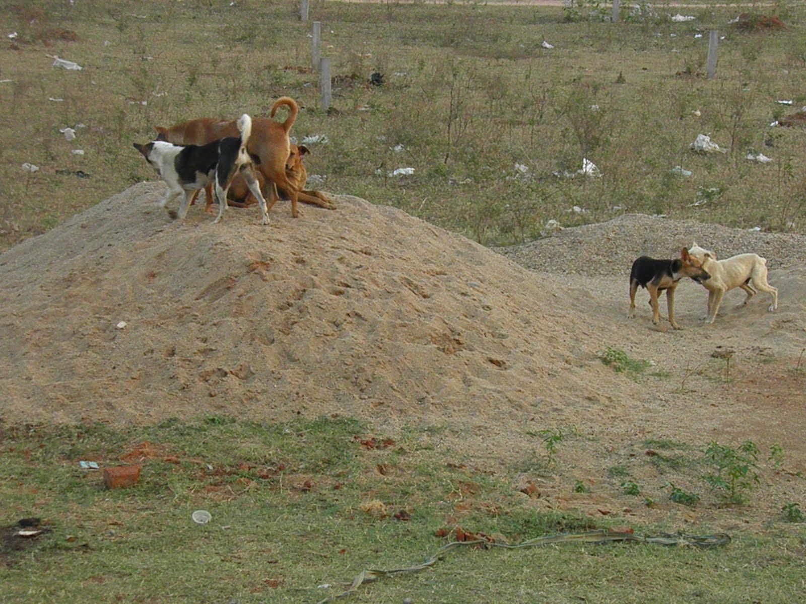 Image Result For Dog Waste Disposal