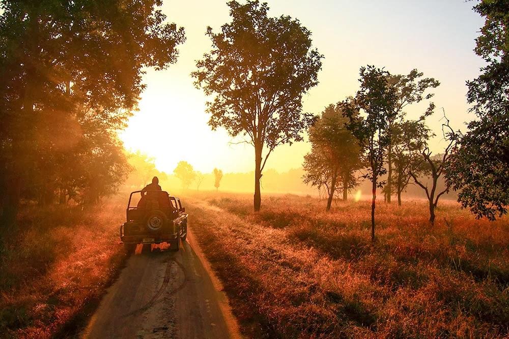 Kanha & Bandhavgarh National Park