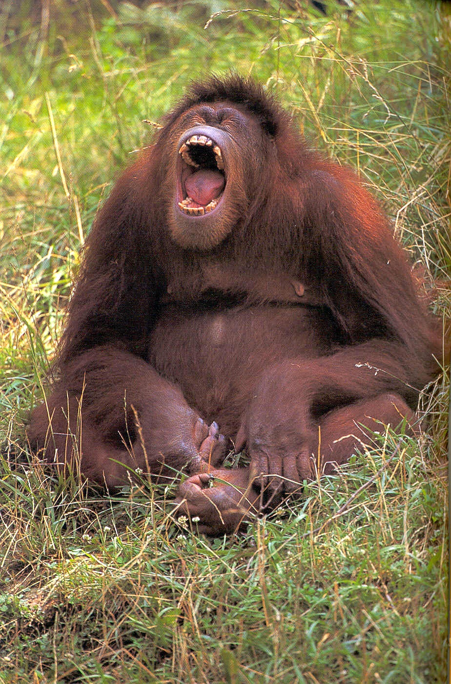 Sex xxx orangutan erotic gallery