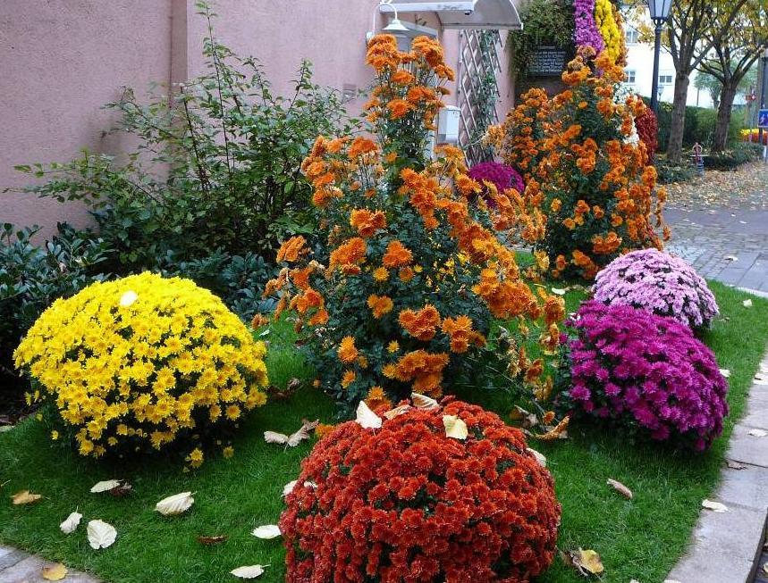 9 Лучших Теневыносливых Растений Тенелюбивые
