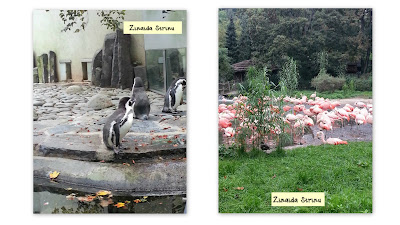 zoo-praga-pinguini-si-flamingo