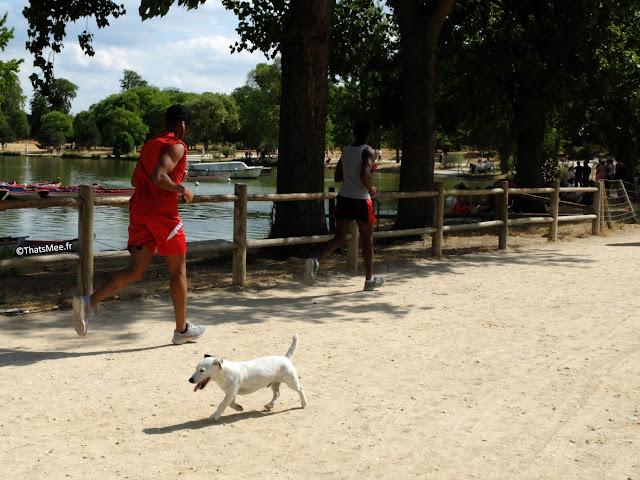 Bois de Vincennes coureurs joggeurs running chien