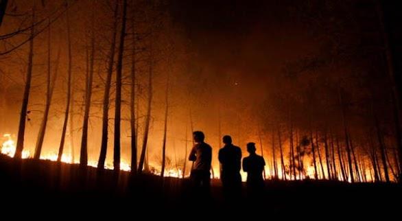 Inilah Perusahaan Malaysia Pembakar Hutan di Riau