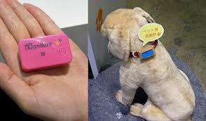 Wandant - Gadget Unik untuk Anjing