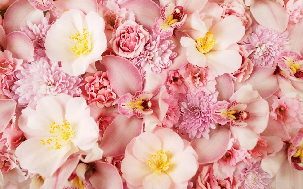 http://1.bp.blogspot.com/-PVotgCUDwi4/TzpgZozSpSI/AAAAAAAABTA/ktzWsCJGmTA/s1600/pink_orchids-1280x800.jpg