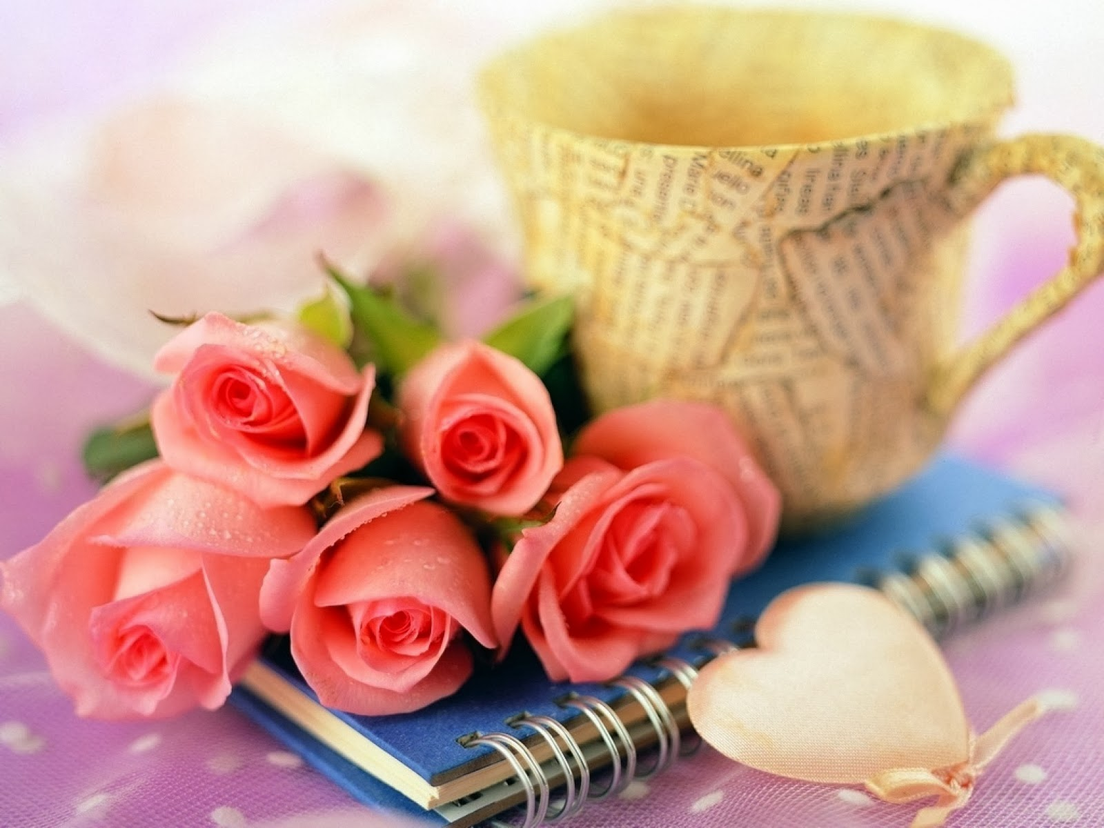 Beautiful pink roses flowers lovely wallpapers izmirmasajfo