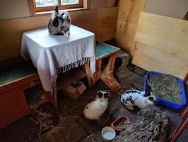 Adoptie konijnen