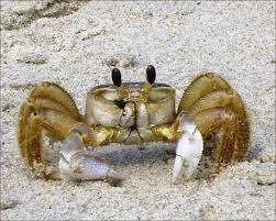 Contoh Hewan Crustacea