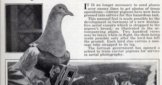 Pigeon Hole Carrier Pigeons Turn Cameramen World War One