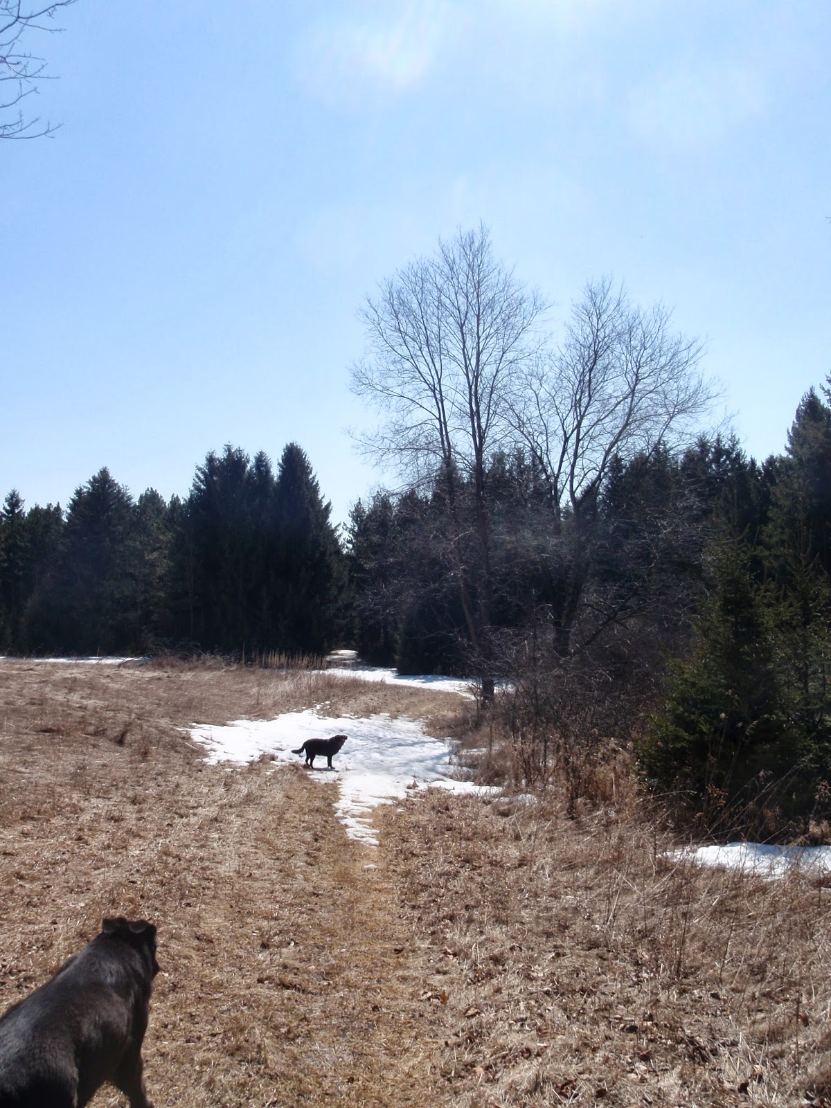 Spring thaw on the Ice Age Trail - Northern Kettle Moraine State Forest - Greenbush Recreation Area
