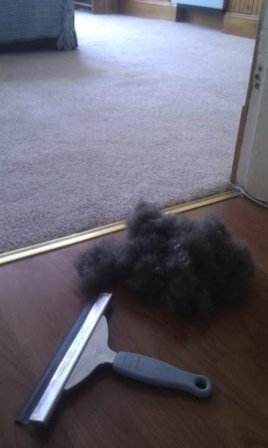 Como remover pelos de animais dos carpetes