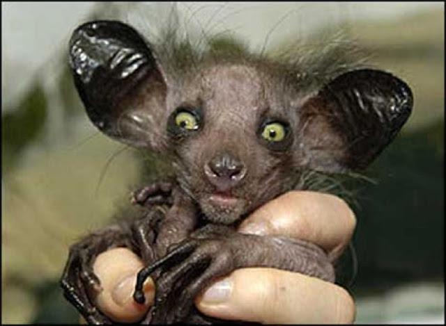 Horrores de la naturaleza: Las criaturas mas feas del mundo