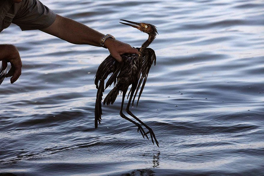 #13 Bird In Oil Spill - 22 Heartbreaking Photos Of Pollution That Will Inspire You To Recycle