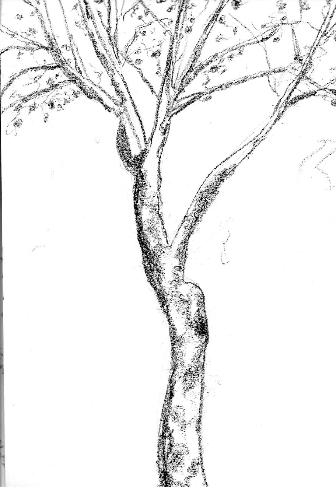 Croquis en plein air - Croquis arbre ...