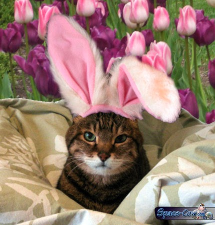 funny Easter cat picture