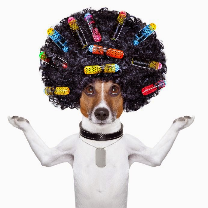 dog, afro, hairdressers, marketing