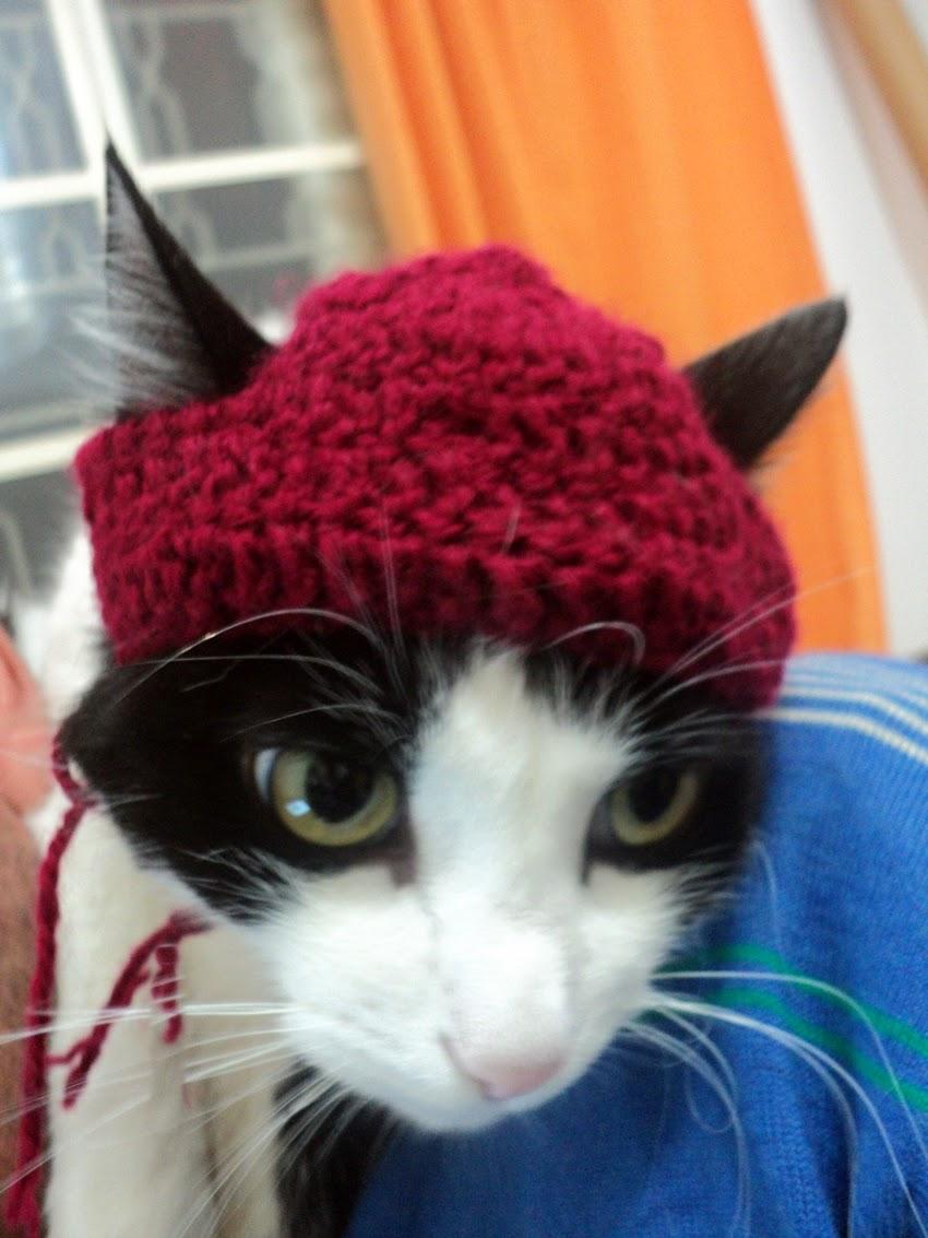 Touca para gatos em crochê com passo a passo - Katia Ribeiro Crochê Moda e  Decoração eac76172e60