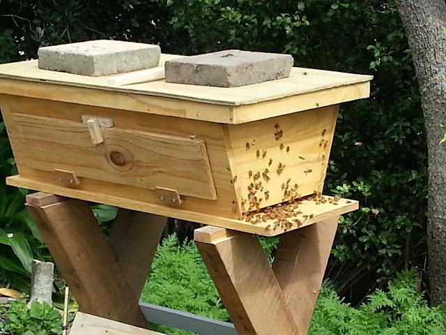 Kiwi Beekeeping TopBar Hives