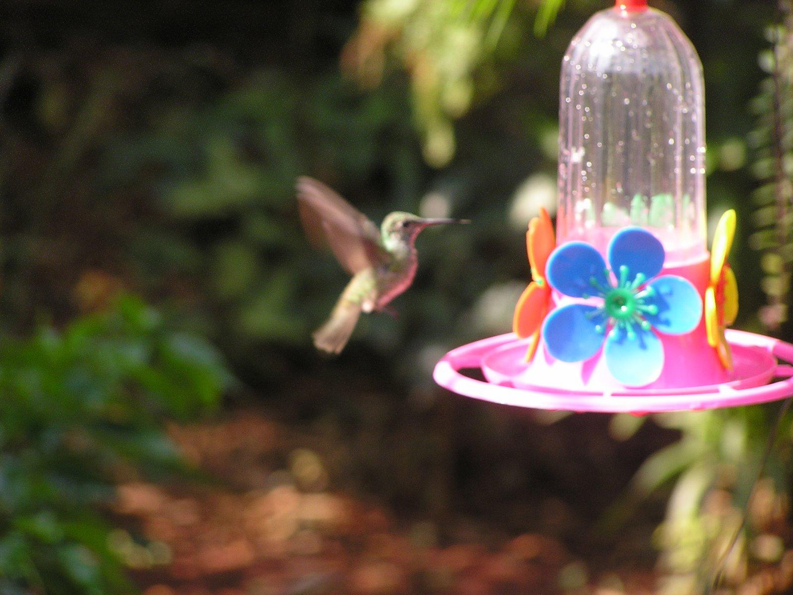 Todas somos reinas colibries magia en el aire for Bebederos para aves jardin
