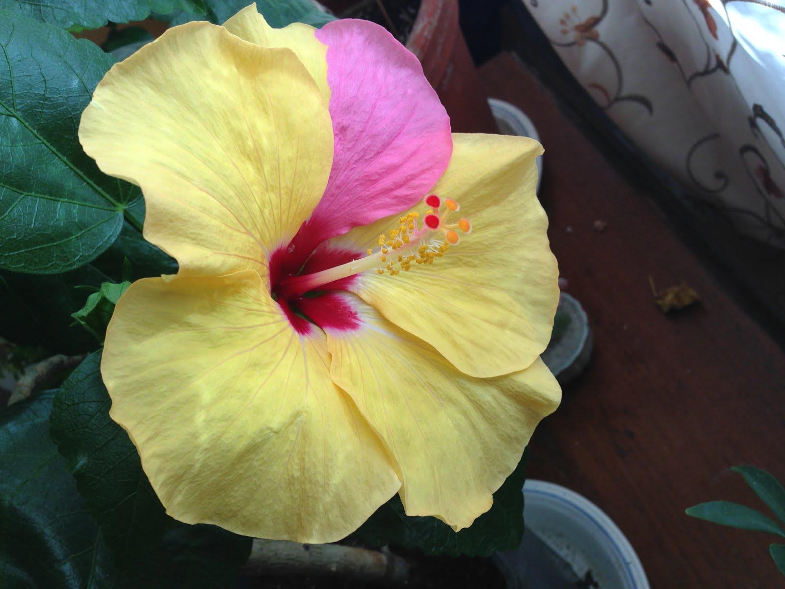 Min underbara blomma 22.8.2017