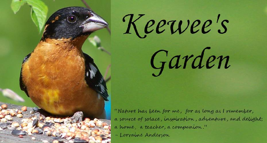 KeeWee&#39;s Garden