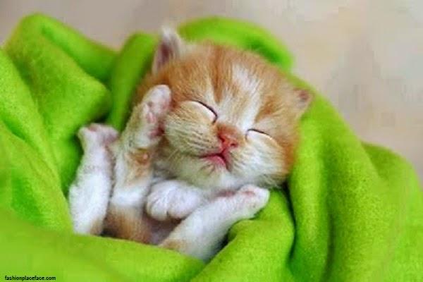 Photo bébé chat mimi