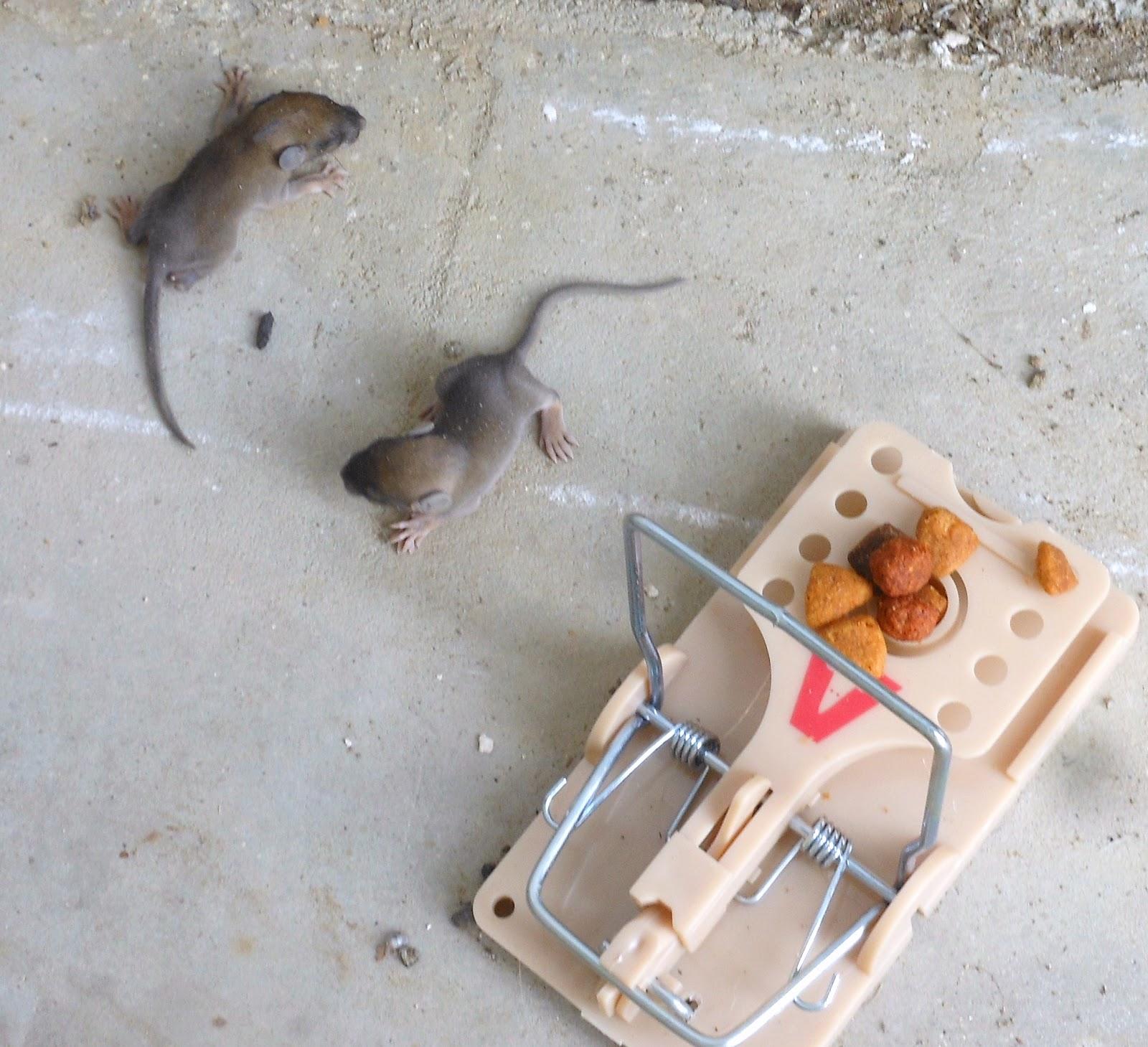 Days 580 584 victoria park john anson ford park rats
