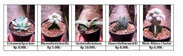 Daftar Nama dan Harga Kaktus