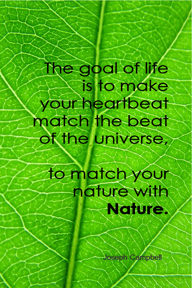 visual quote - image quotation for Nature - The goal of life is to make your heartbeat match the beat of the universe, to match your nature with Nature. - Joseph Campbell