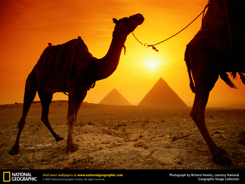 Wallpaper Collections Camel Background