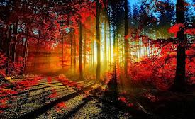 La Luz de un Nuevo Día