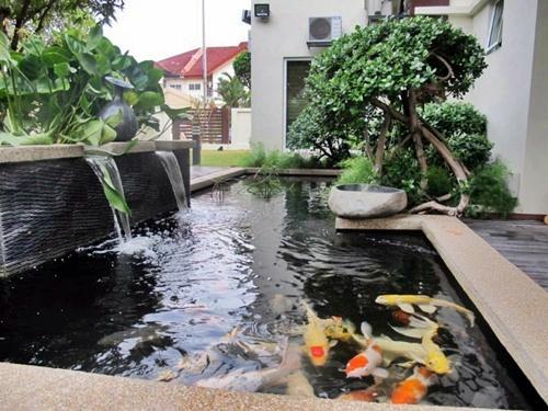 Ikan koi perawatan koi pemeliharaan dan desain kolam for Estanque koi pequeno
