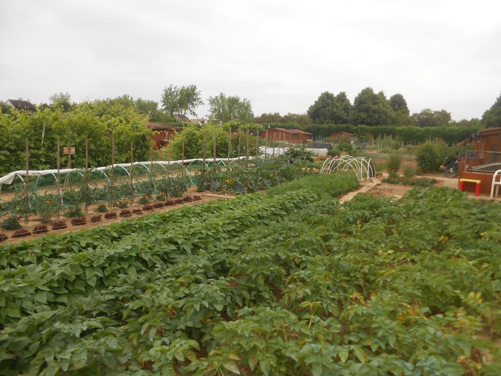 Jardins familiaux de savigny le temple seine et marne for Jardin familiaux