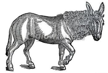 The Platinum Donkey