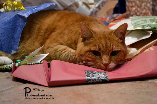 Katze Mimi verbringt das Weihnachtsfest völlig entspannt