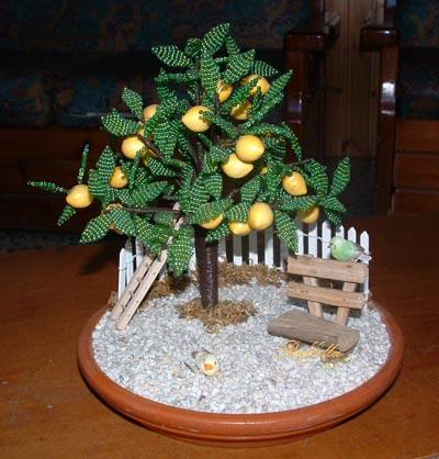 Polvere di fata bonsai e fiori for Bonsai limone vendita