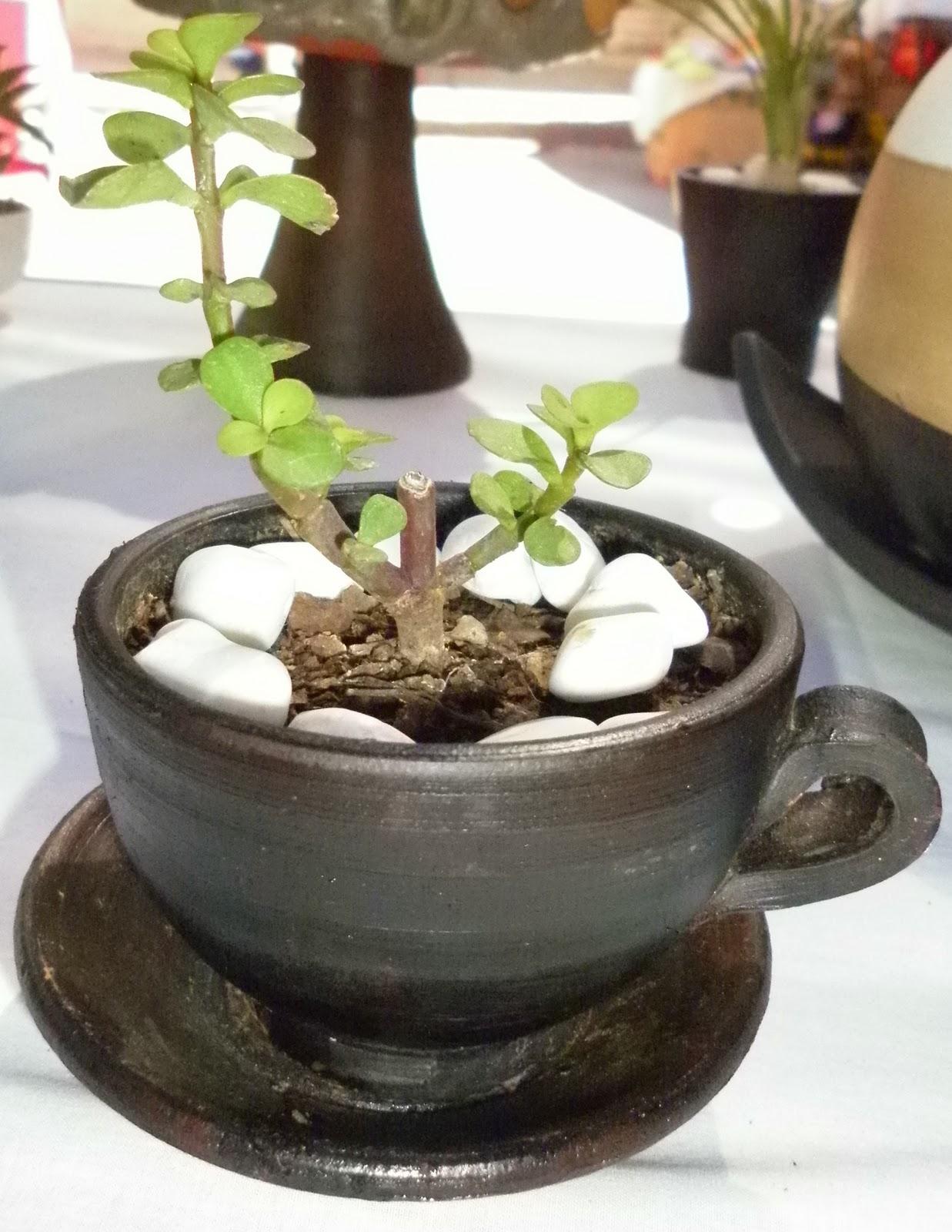 Gecko macetas y plantas for Plantas en macetas