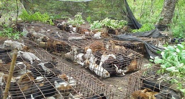 Dog Meat — Underground Thai business