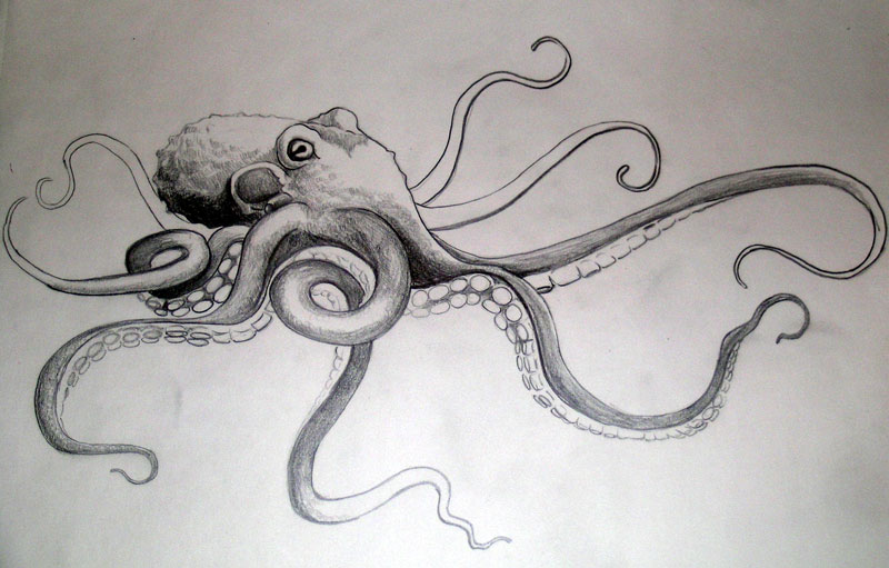 how to draw a octopus realistic