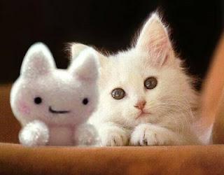 Pet Planet Cat Food